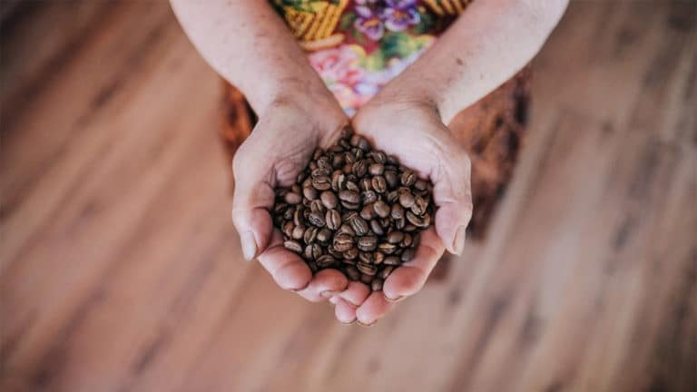 Guatemala Coffee – Nutrient-rich soils and harmonious coffees