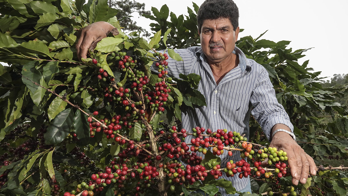 Honduran Coffee - coffee and espresso in its purest form