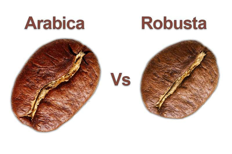 arabica coffee vs robusta coffee