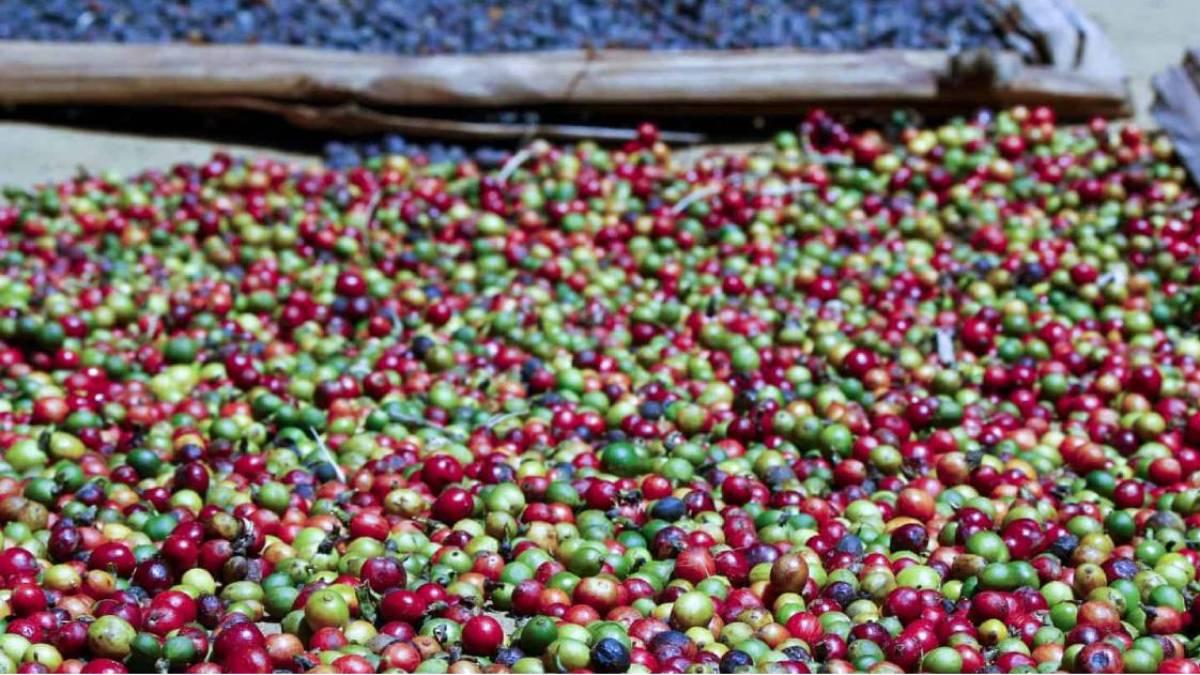 Coffee In Madagascar
