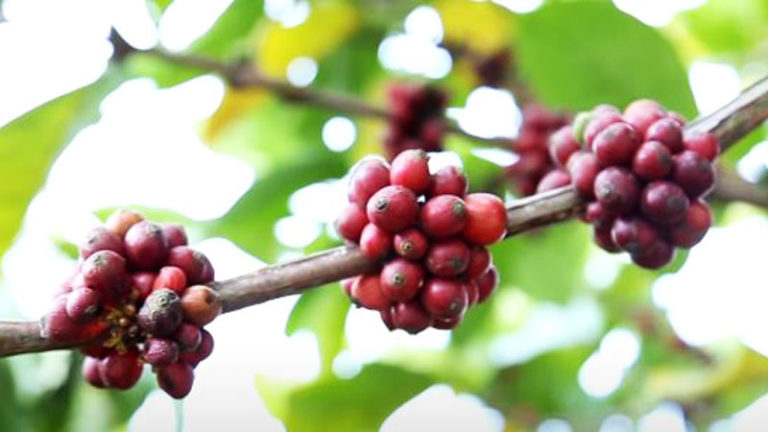 Filipino Coffee