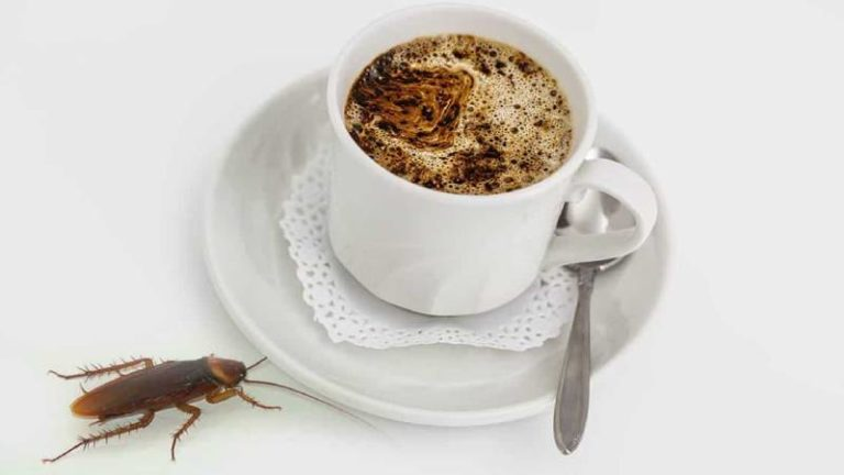 How to Keep Roaches Out Of Your Coffee Maker? 3 Helpful Steps