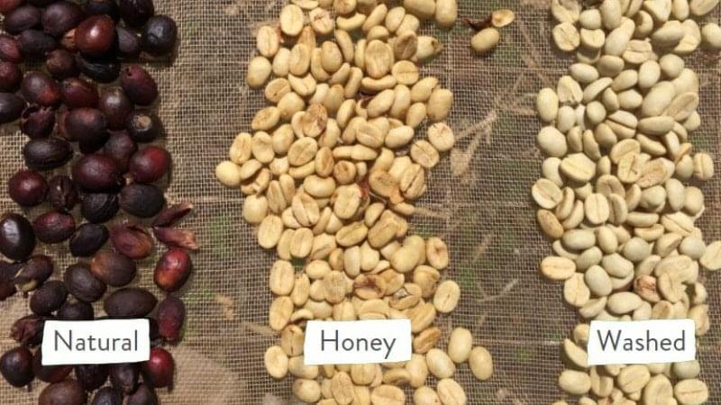three ways of processing coffee cherries